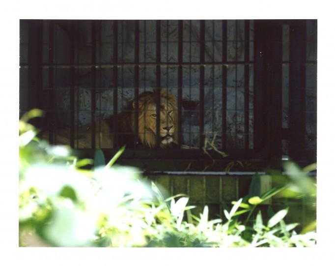 ライオン(ポラ)